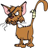 chaton-moche